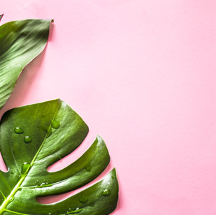 tropical-leaves-colored-background.jpg