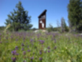 Bear Valley Bear Paw Sign surrouned by purple wildflowers.