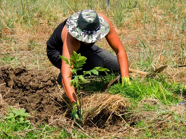 Taniko Farm Madagaskar Bauer Bäume pflan