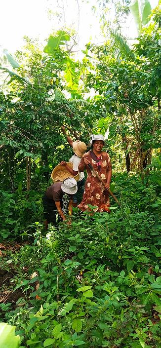 Kaffee Plantage Madagaskar Bourbon Point