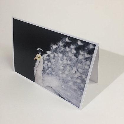 Gift Cards - Inner Light - White Peacock