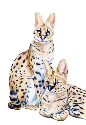 Nanki & Morili the Servals - limited-edition print