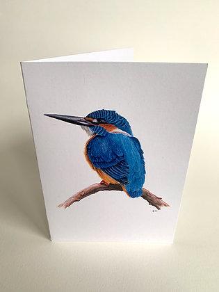 Dive Deep - Kingfisher