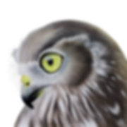Barking+Owl+small-2.png