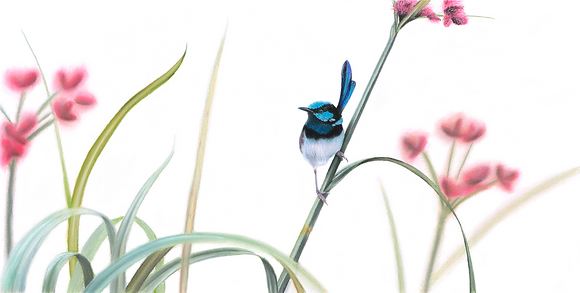 The Heart's Will - Superb Blue Fairy Wren