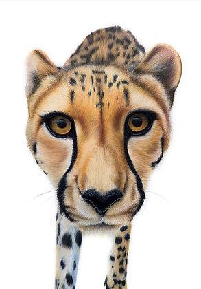 Kulinda the Cheetah - limited-edition print