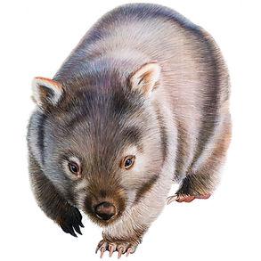 Wombat A2.jpg