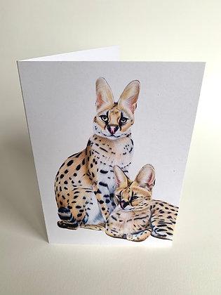 Nanki & Morili - Werribee Open Range Zoo Servals