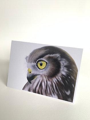 Prophecy - Barking Owl