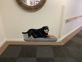 Abby dog Lyndoch Living.jpg