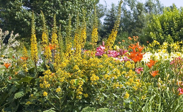 Perennial Garden with lilies and day lilies