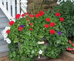 """Geranium Planter"""