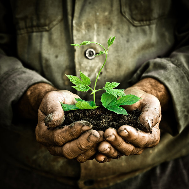 Soil is the key to healthy plants