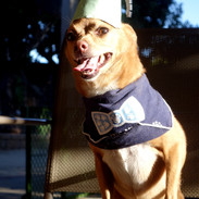 Razer's 6th bark-day