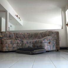 The Dog Couch-Cage-free Boarding Facility