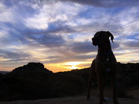 Dog Hiker