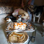 Marley's 2nd bark-day | Beef and veggie mutt-loaf & carrot cake