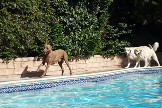 dogs exercising and socializing