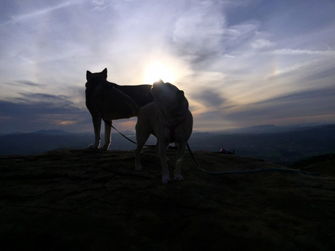 boarding dogs on a hike at sunset