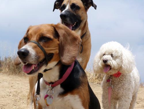 Dog Hike at O'melveny Park