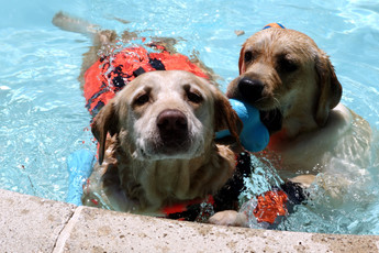 Doggie Swim Lessons