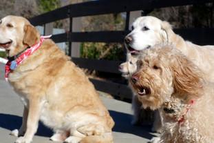 dog walk at o'melveny park in granada hills