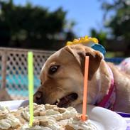 Marley's 3rd bark-day