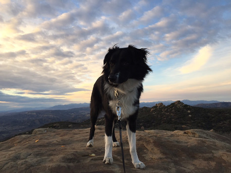 rocky-peak-dog-hike-simi-valley