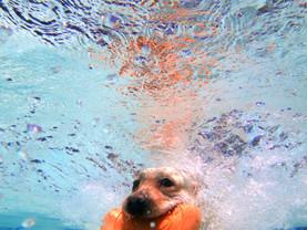 Underwater diving dog