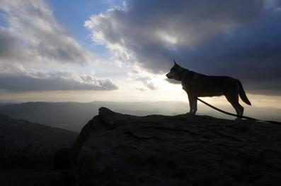 Adventure-dog-hikes