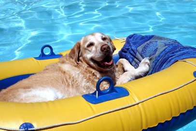 Dog lounging on raft at Granada Hills Dog Daycare