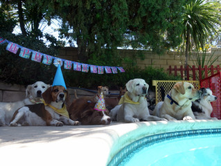 More from Holly's 4th barkday!