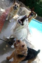 friendly dogs at san fernando valley dog daycare