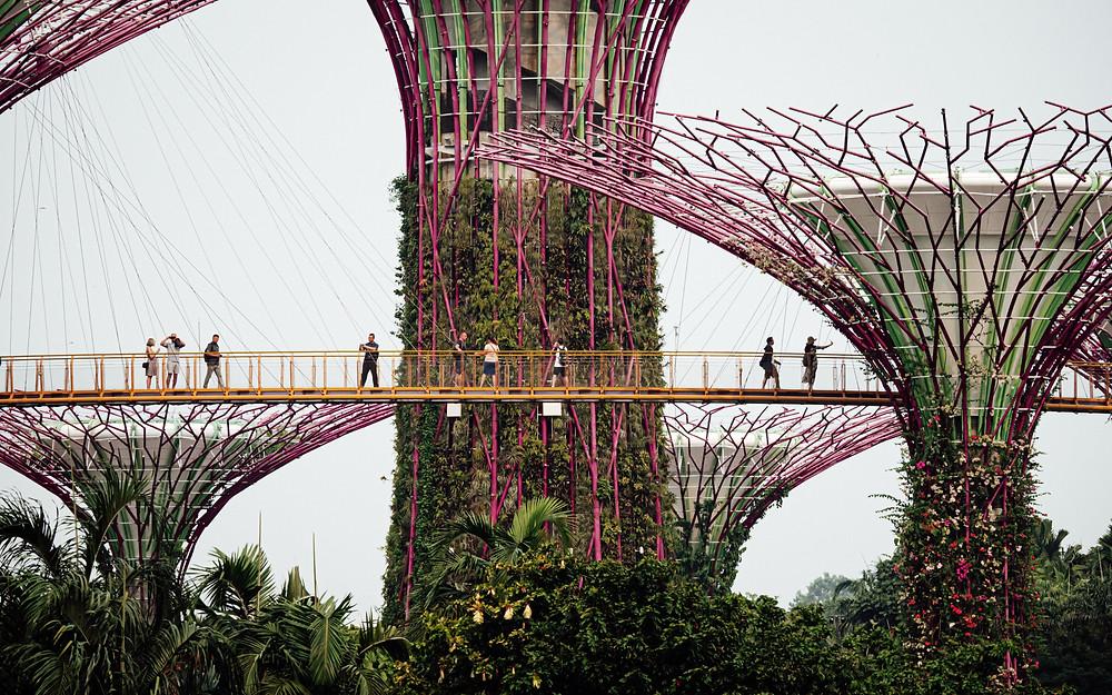 Gardens by the bay ridge walk Singapore