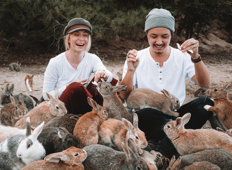 Spending a day on Okunoshima bunny island Japan, how to get there and what to expect!