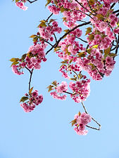 low-angle-view-of-pink-flowers-against-b