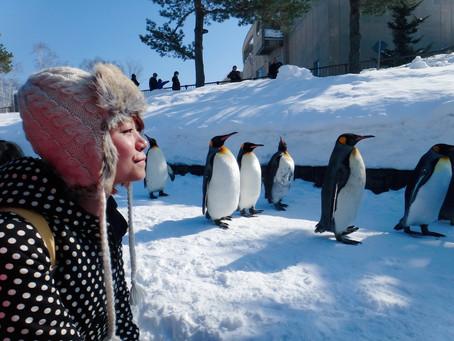 哈囉北海道|旭川|在旭山動物園,跟企鵝一起散步。