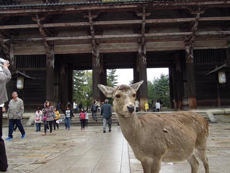 〖跟著柴郡貓去旅行〗 奈良,小鹿漫步夢遊仙境
