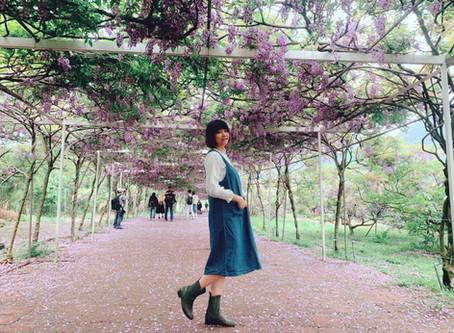一秒到日本|台灣也有浪漫紫藤花!