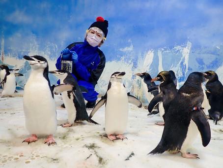 墾丁の旅|屏東海生館|我與企鵝的親密接觸。