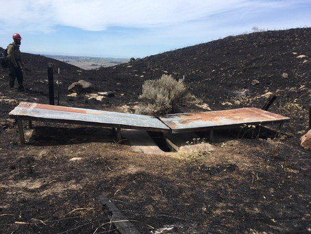 Guzzler survives wildfire.
