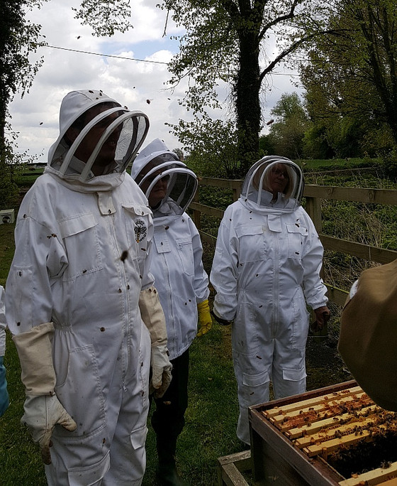 A Beekeeping Taster Day