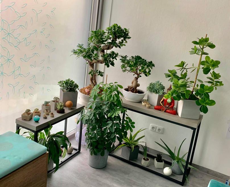 naša Zen záhradka