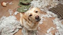 I cani fanno i dispetti ?