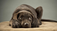 Comportamenti di paura nel cane: il freezing