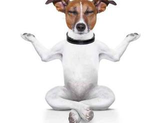 Come insegnare la calma al tuo cane