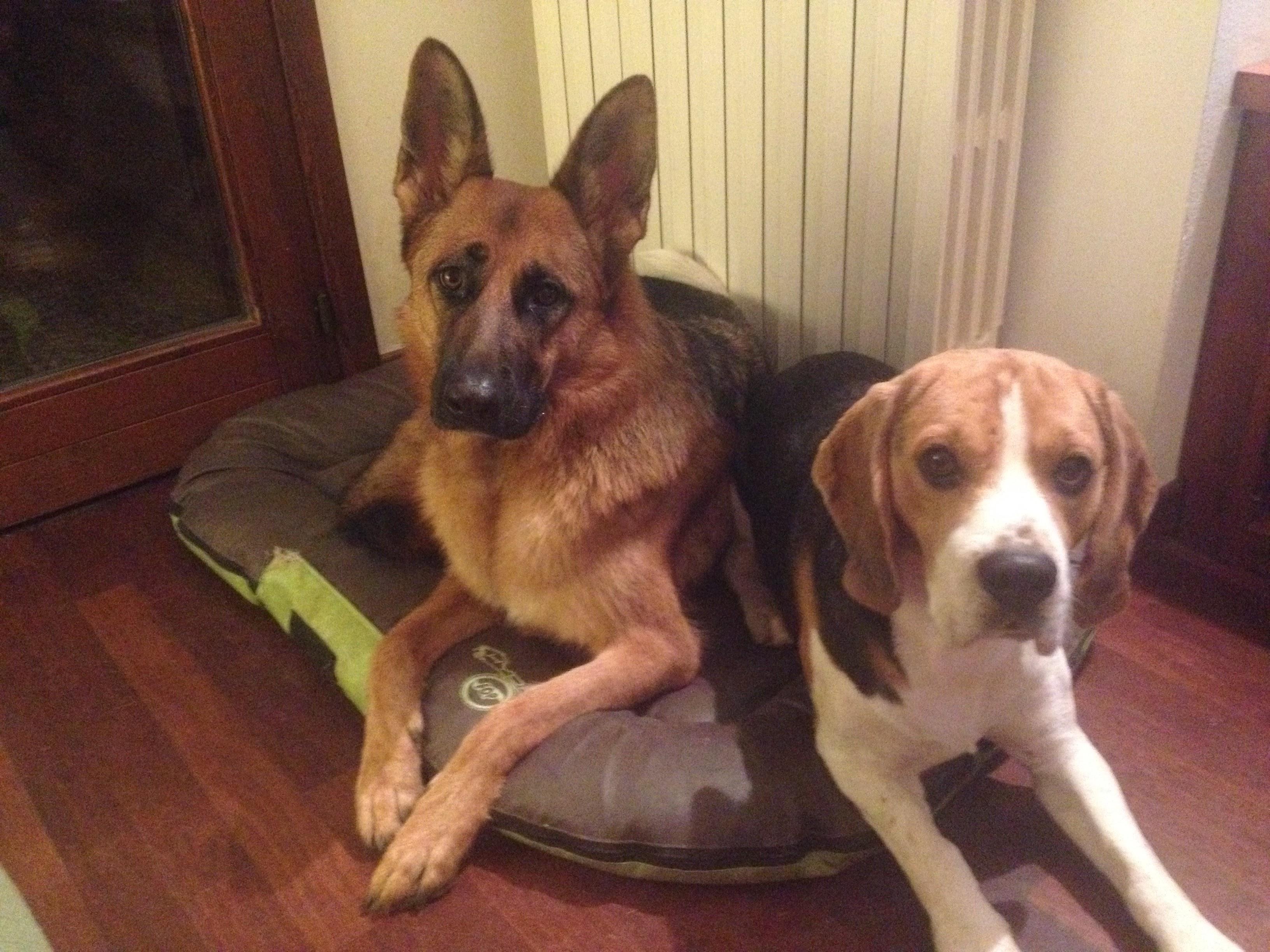 Pablo e Layla