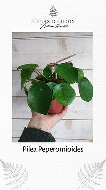Plante - exemple 1.jpg