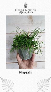 Plante - exemple 3.jpg