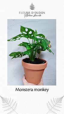 Plante - exemple 4.jpg
